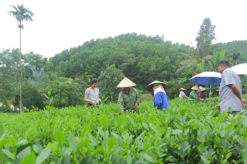 Cua-hang-ban-che-non-tom-Tan-Cuong-Thai-Nguyen-o-Hai-Phong-Htea.vn-3