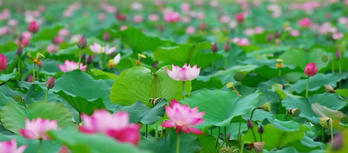 Chè Thu Huyền Hải Phòng