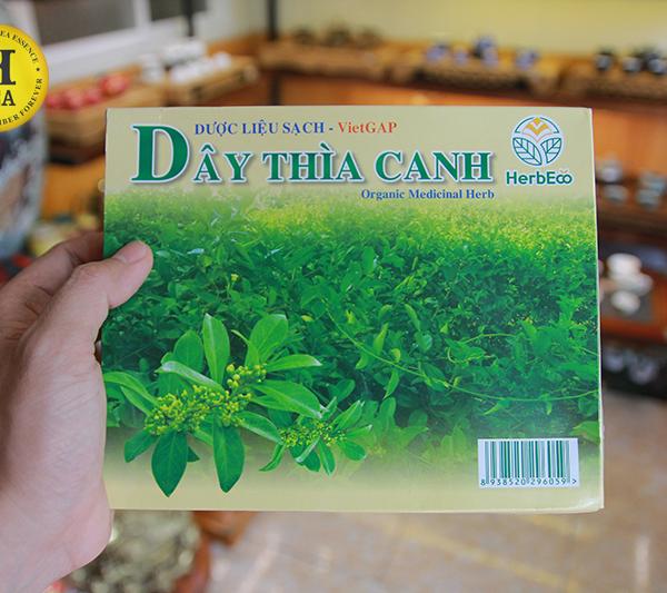 Dây-thia-canh-o-hai-phong-01-htea.vn